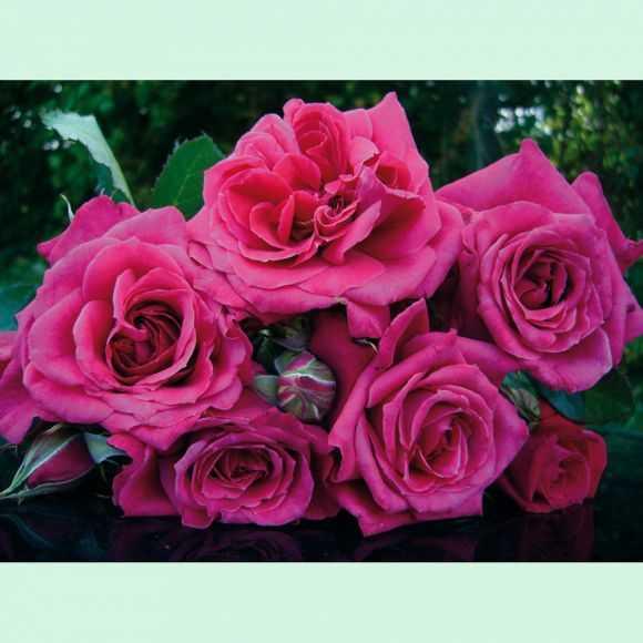 Bouquet La Roche-Guyon®