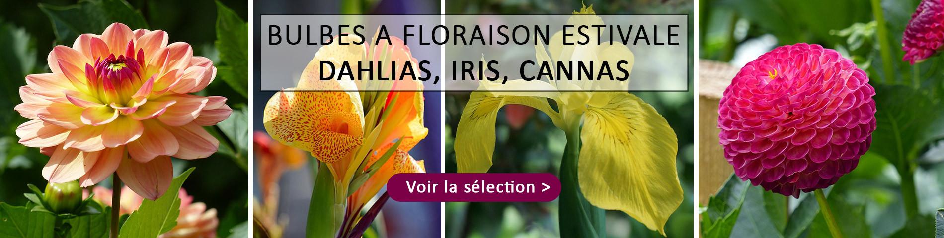 Dahlias, Iris, Canna...