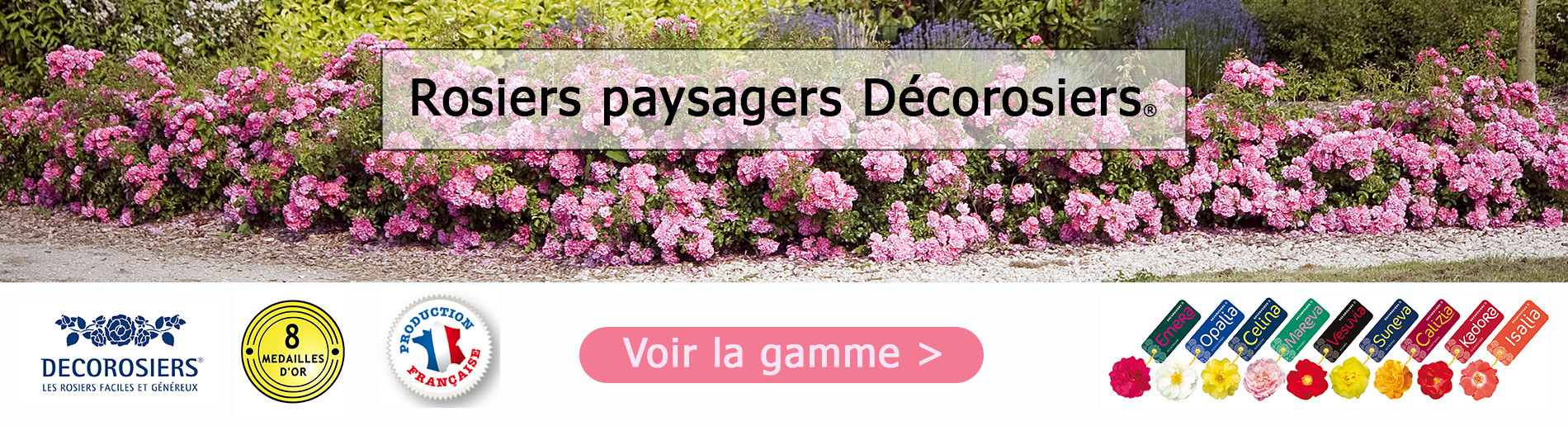 Rosiers paysagers Décorosiers®
