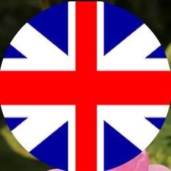 Anglais-thumb