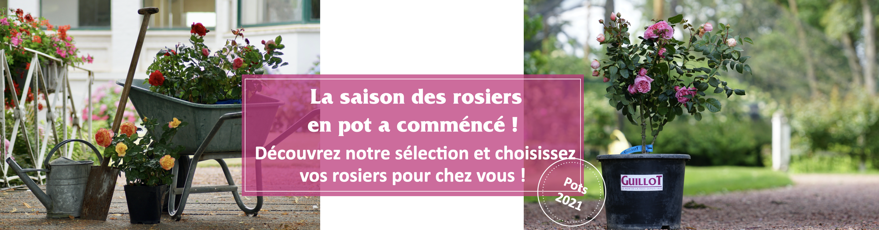 Rosier en Pot - Expedition 2021