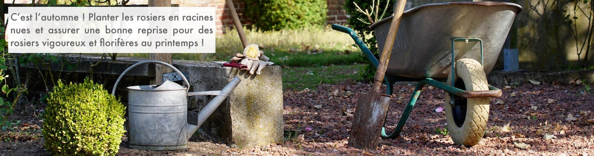 A la sainte Catherine, tout bois prend racines.